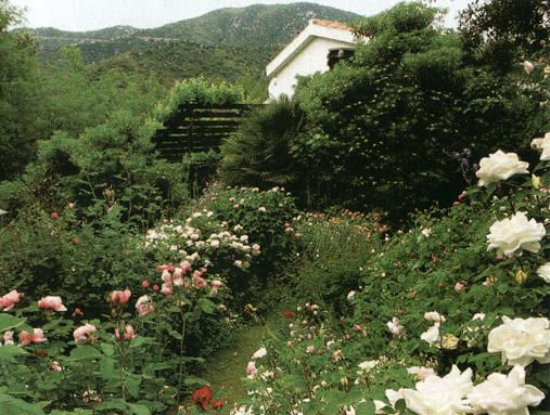 Il giardino usai - Gardenia pianta da giardino ...
