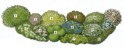 Il bello dell 39 argilla for Cespugli fioriti perenni da giardino