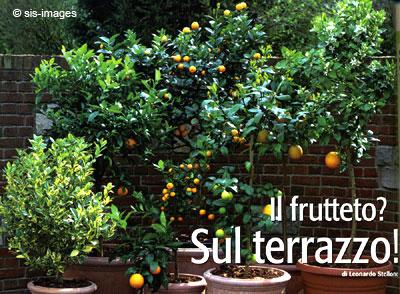 Il frutteto? Sul terrazzo!