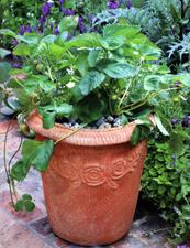 Il frutteto sul terrazzo for Fragole piante in vaso