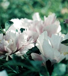 Belle per duecento anni for Donare un giardiniere