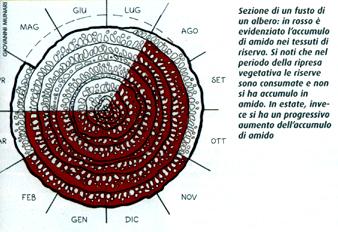 Calendario Potatura Piante.La Potatura Degli Alberi Ornamentali