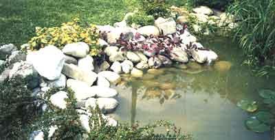 Pulizia regolare per acqua pi sana for Vasche per laghetti artificiali