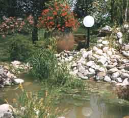 Pulizia regolare per acqua pi sana for Pompa laghetto esterna