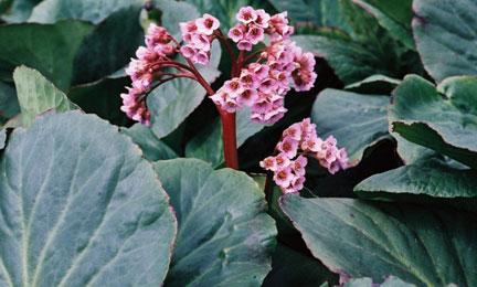 Una bella tavolozza di piante vivaci
