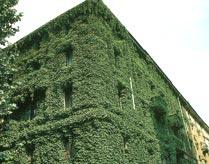 Pareti vegetali effetto antismog for Case ricoperte di edera