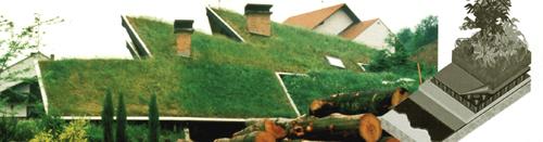 Tetti verdi per un 39 aria pi pulita for Soluzioni giardino in pendenza